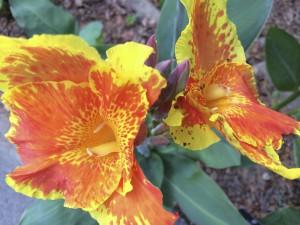 IMG_5462_botanicgarden-flower