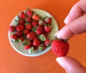 photo(62)_berries