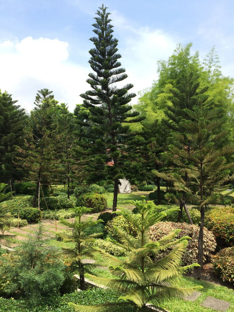 Balay Puput Garden