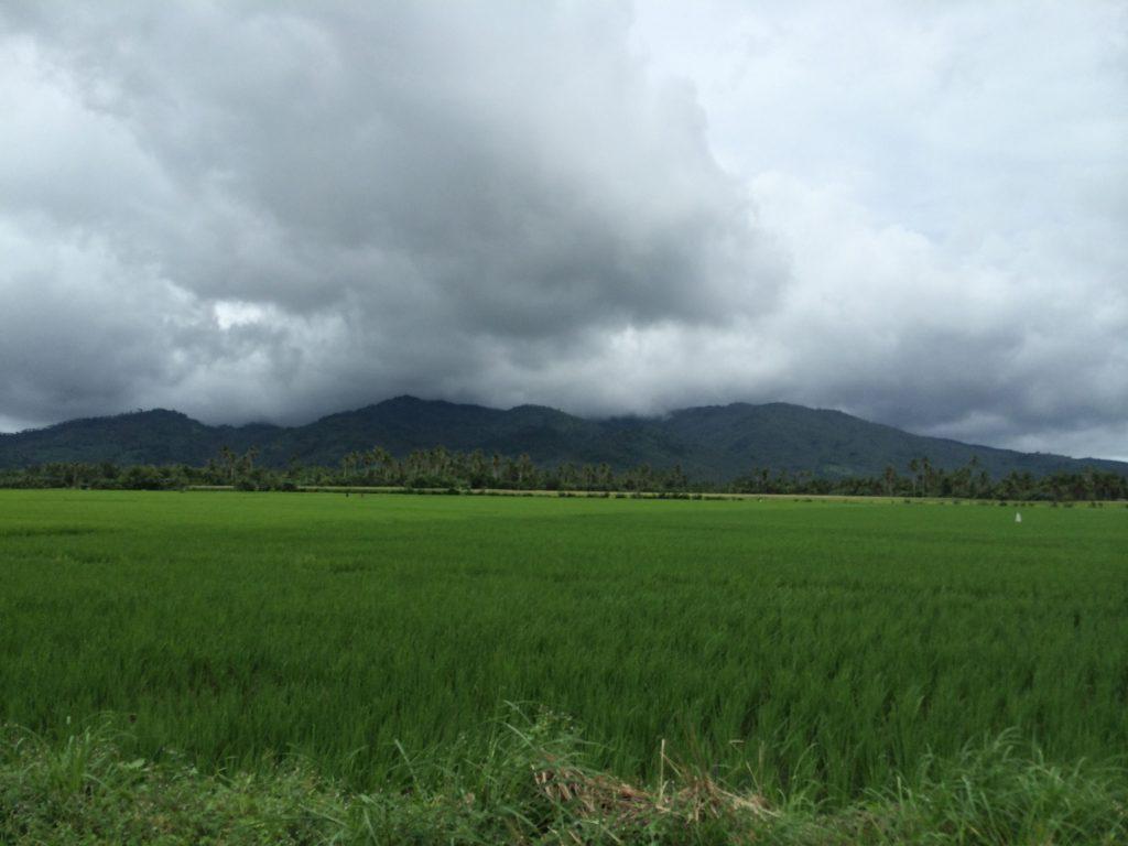 ricefields-at-pinamalayan